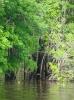 Mit dem Boot in die Seitenarme des Rio Negro