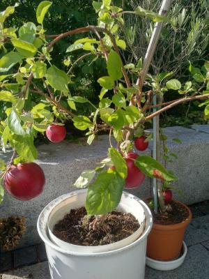 Das Geschenk der letzten Klasse von Winfried trägt reiche Frucht.