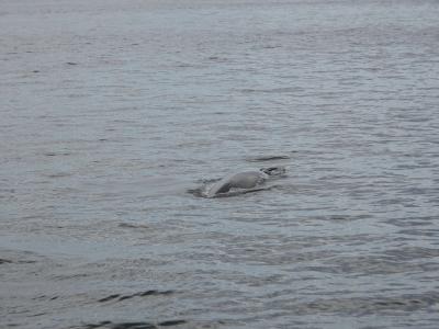 ....ist berühmt für's whale watching. Motto: ein schöner Rücken kann auch entzücken...
